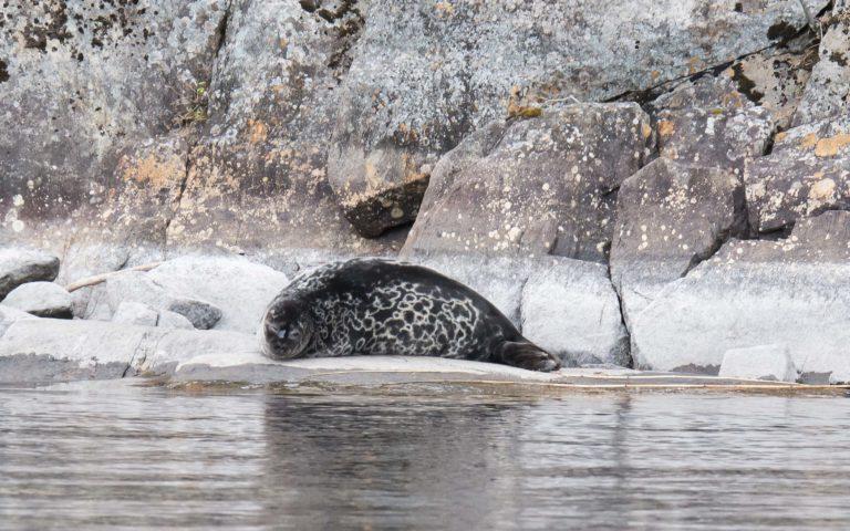 Sightseeing cruise from Järvisydän on Lake Saimaa Tue, Thu, Sat 18.6.-28.8.2021