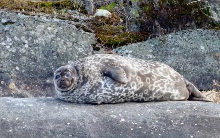 Sunset Seal Safari in Linnansaari National Park