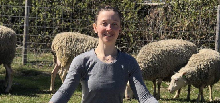 Joogaa lammaslaitumella