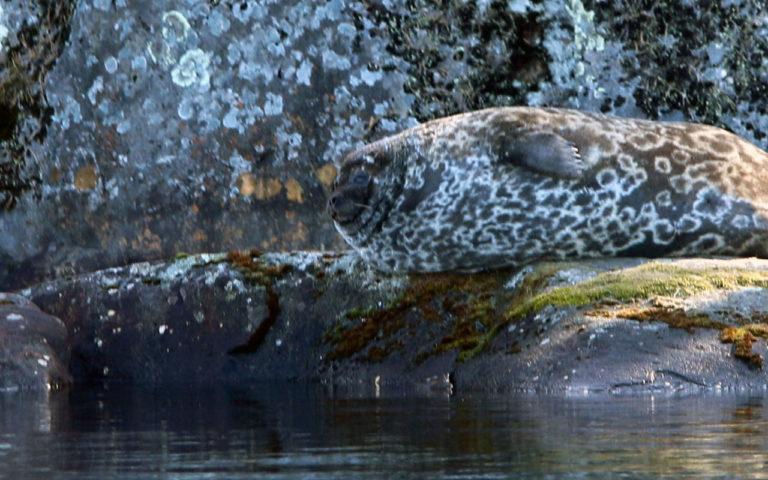 Accessible sealsafari in Linnansaari National Park (PRIVATE)