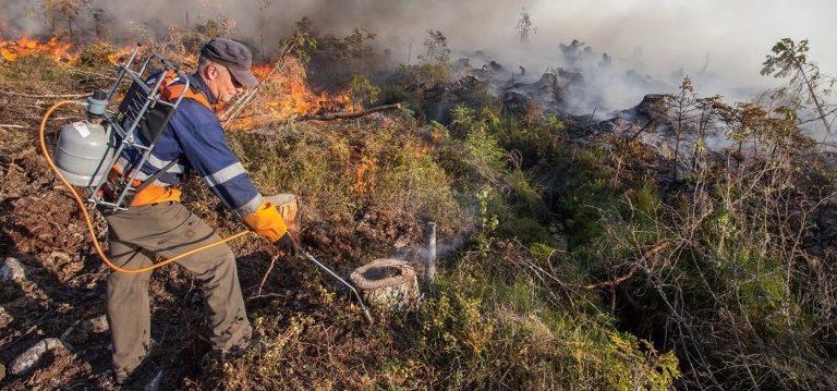 Kulota – Valokuvia tulen hyödyntämisestä metsänhoidossa